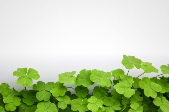 27856769 - clover with white background ,blank place can copy your document